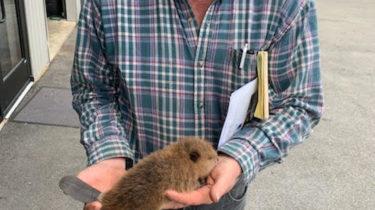 Beacon Hill Wildlife Biologist Mark McDonald